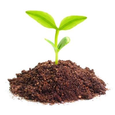 alimentacion ecologica biologica