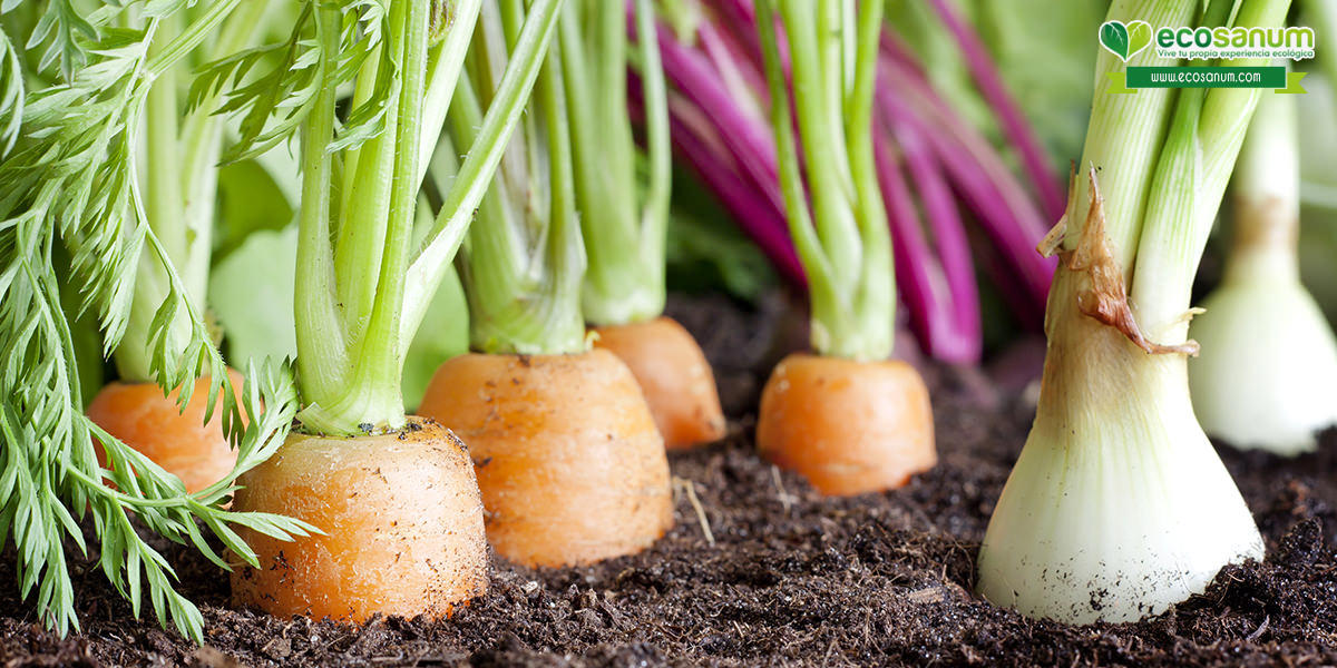 alimentos ecológicos biológicos orgánicos diferencias